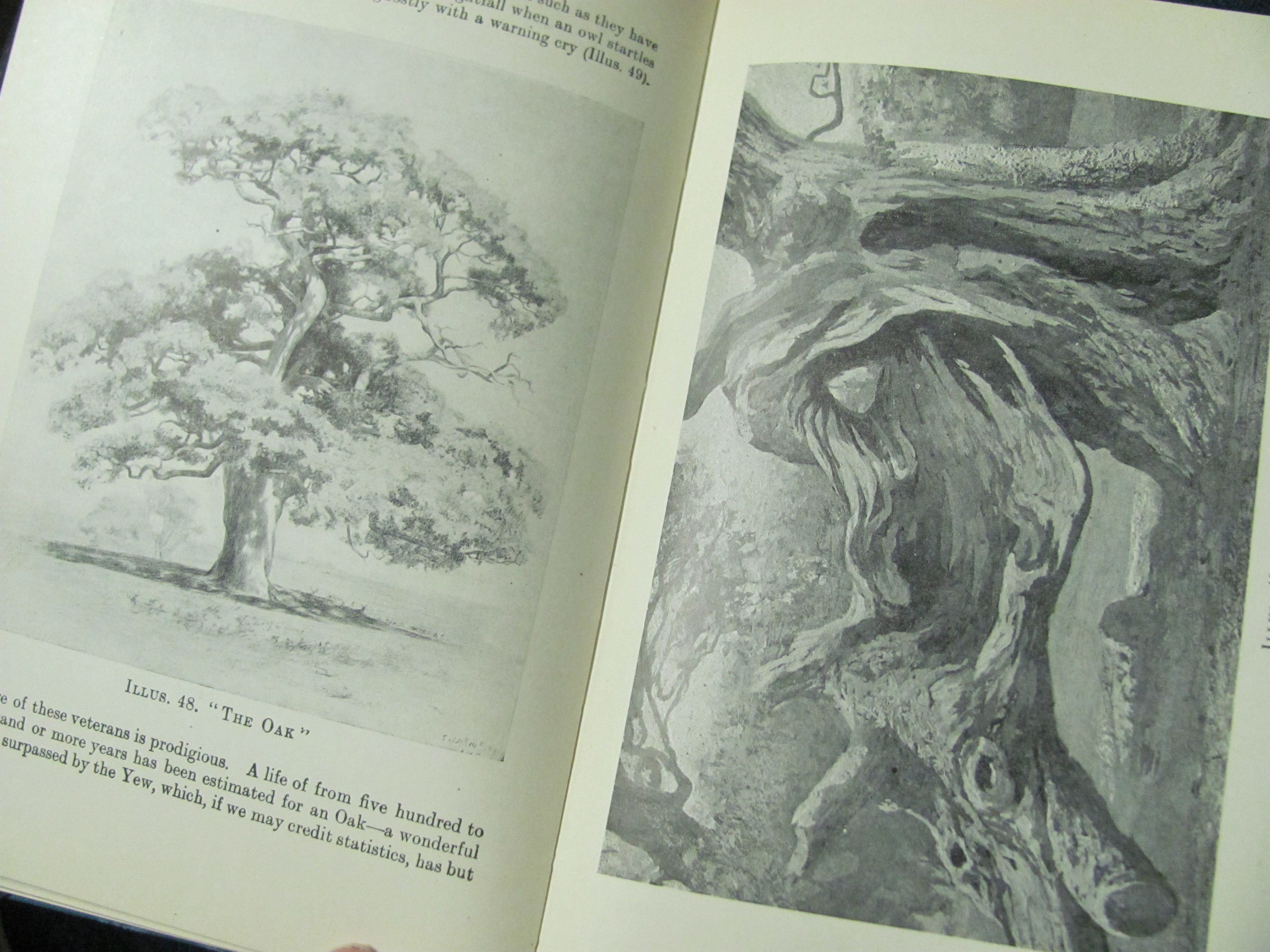 The Artistic Anatomy Of Trees By Rex Vicat Cole From Victory Road